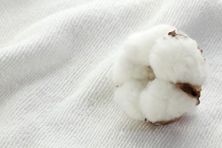 cotton flower: Cotton flower on cotton towels Stock Photo