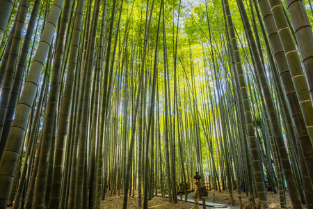 Bamboo Garden in Kamakura, Japan