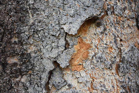 Embossed texture of the bark of tree with brown and orange.