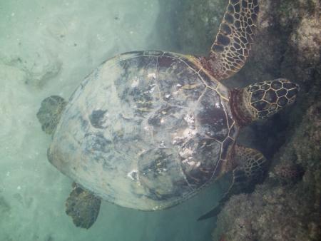 tortue verte: tortue verte Banque d'images