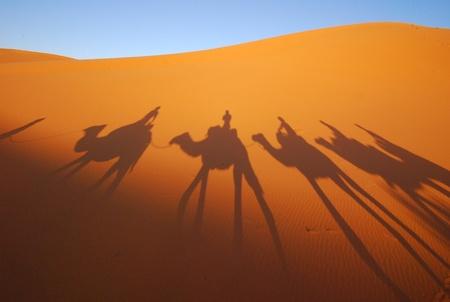 desierto del sahara: la sombra del camello en el desierto del Sahara Foto de archivo