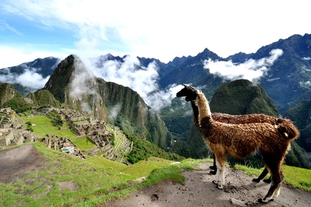 lama and machu picchu peru photo