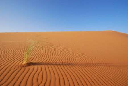 grass on the sahara Stock Photo