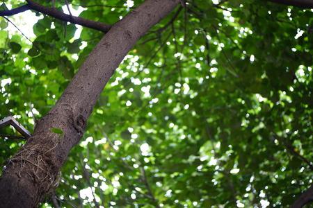 eye shade: Tree-lined Stock Photo