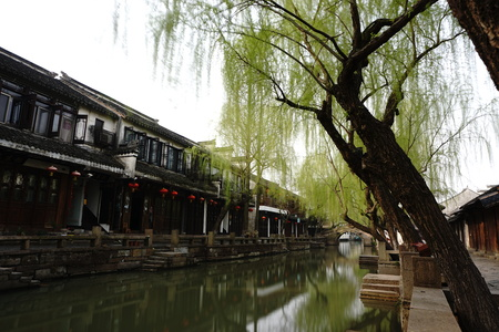 willow: Weeping willow