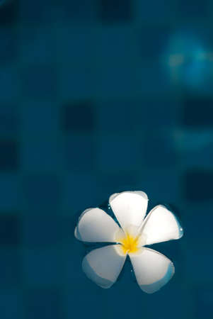 Floating plumeria photo