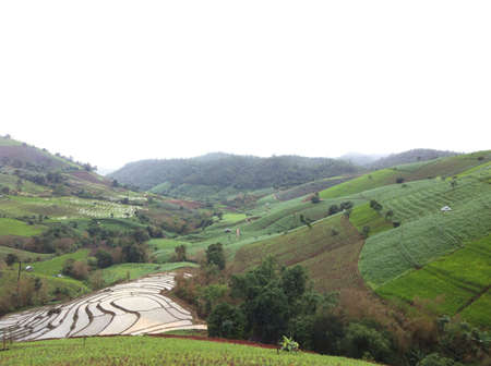 rice terrace: A beauty rice terrace in the north of Thailand, Chiangmai