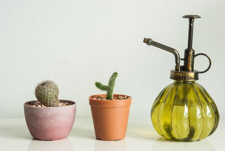 watering pot: potted mini cactus and watering pot