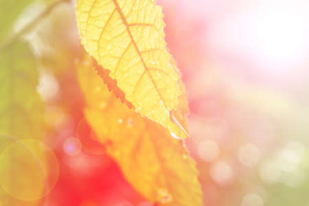 assort: Beautiful leaf with soft focus color filtered background Stock Photo