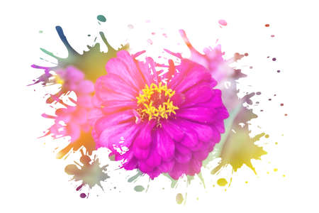 assort: Beautiful flower with soft focus color filtered background Stock Photo