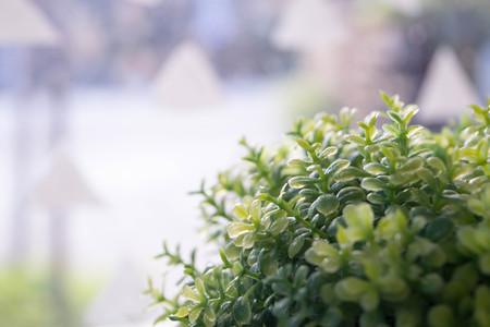 Decorative grass in flowerpot Stock Photo