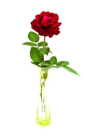 RED VALENTINE ROSE photo
