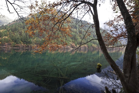 fairyland: the mirror lake in autumn, jiuzhaigou, china