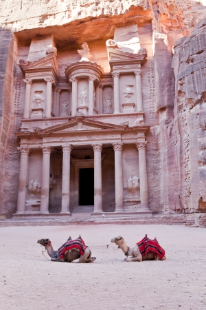 camels in front of the treasury in petra, jordan photo