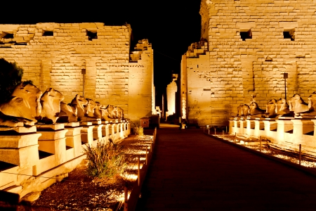 ram-headed spinx at karnak temple in the night, luxor, egypt photo