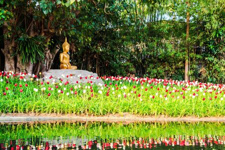buddha image under the bodhi tree at phan tao temple in chiang mai, thailand photo