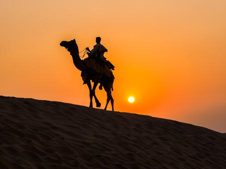 thar: Camel at Thar Desert near Jaisalmer in Rajasthan, India