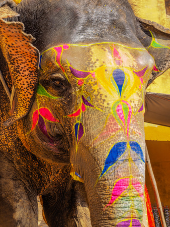 amber fort: Elephant at Amber Fort Stock Photo