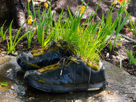 Plants grow up in a pair of black boots in a garden