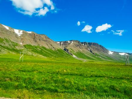 夏に黄色の花のフィールドと緑のアイスランドの風景