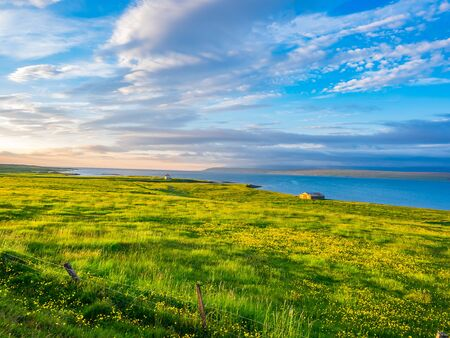 View of green field with yellow flowers and houses on the seaside in Iceland in the evening