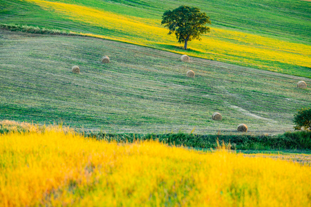 Beautiful lanscape of hilly tuscany in the sunny day with the hay bailes in the field