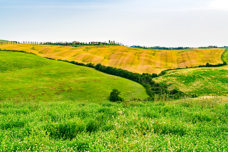View of the hilly tuscany with the field of flowers and cultivated land at Val d'Orcia in Tuscany Italy
