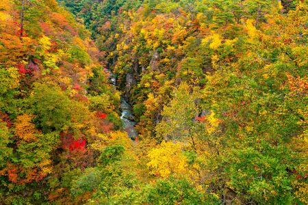 Beautiful scenic landscape of mountain at Naruko Gorge with the colorful foliage of autumn season in the forest and natural stream flow at the foot of mountain in Naruko City, Miyagi Prefecture, Japan.