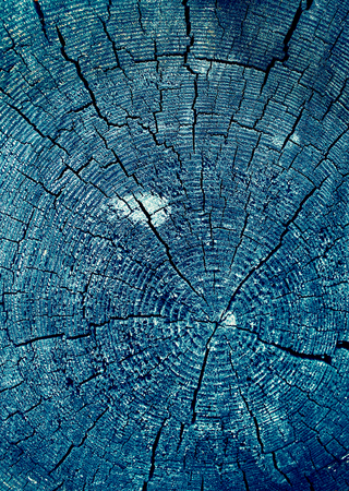 Cross-section of the old tree. background of wooden plank texture wall with selected tone color. Abstract background of an old wooden wall with a bright texture. paint ultraviolet 写真素材