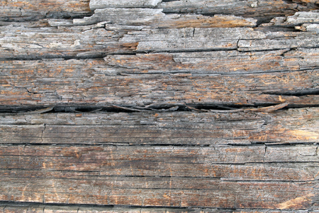 The old wood texture with natural patterns. Inside the tree background. Old grungy and weathered grey wooden wall planks texture background and marked by long exposure to the elements outdoors.