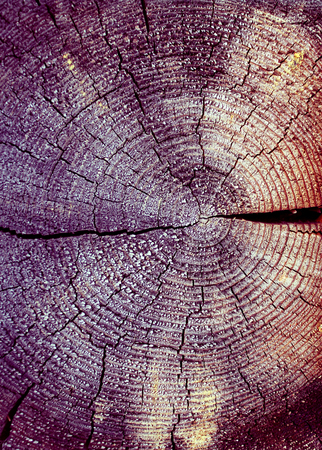 The old wood texture with natural patterns. Cross-section of the old tree