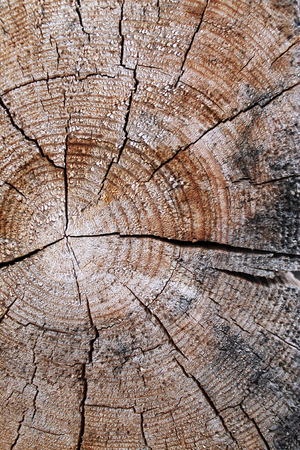 The old wood texture with natural patterns. Cross-section of the old tree. texture of dark wood. natural background. empty template 免版税图像