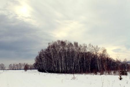 Winter landscape - frosty trees in snowy forest. Road in a wonderful winter forest