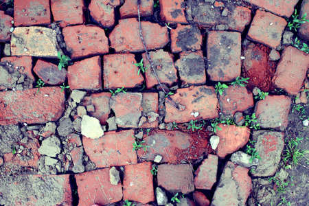 bricklaying from broken red brick with sprouted green grass 版權商用圖片