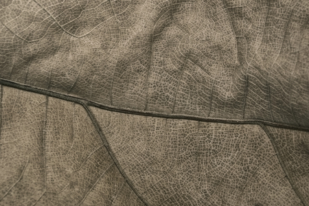 Big dry leaf of a palm tree texture background