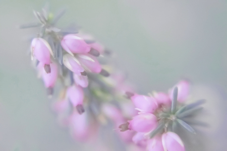 Small pink florets in pastel tones on a green indistinct background Banco de Imagens - 115072479