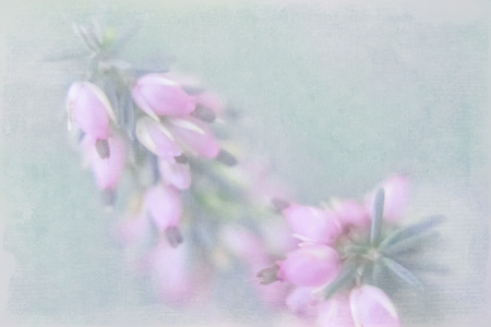 Small pink florets in pastel tones on a green indistinct background with the imposed texture