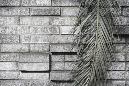 Green leaf of a palm tree on a gray brick wall background with ledges a dark grunge background 写真素材
