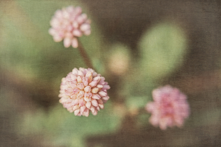 Three small pink tropical flowers on a dark background with a superimposed texture