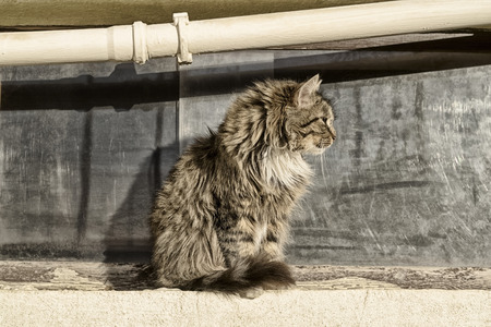 A homeless man spotted a cat sitting in profile against the window and the pipe on a Sunny day