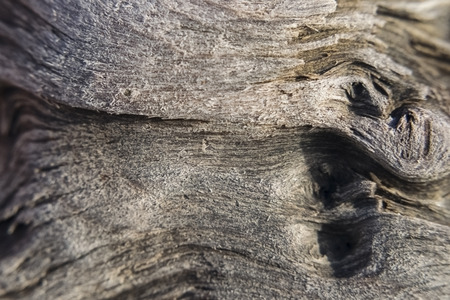 Texture of old wood, crumbled fibers-macrophoto Reklamní fotografie