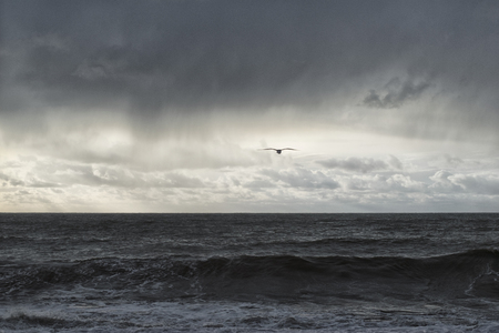Seagull flies into the sunset on the background of black rain clouds and white Cumulus clouds and storm on the sea Reklamní fotografie