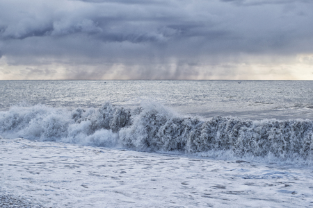 Seascape during a storm with a large wave against the rain with flying gulls