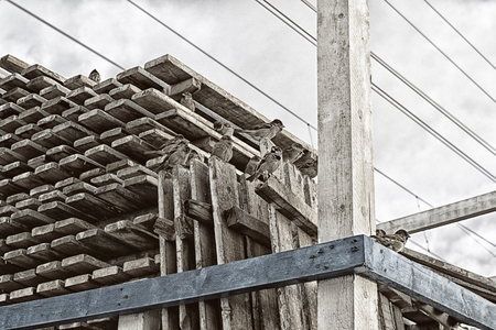 A flock of sparrows sitting on pallets against the sky and wires in the style of grunge