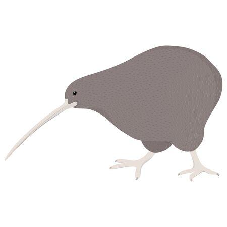 New Zealand national kiwi bird in flat style on white background. Vector illustration.