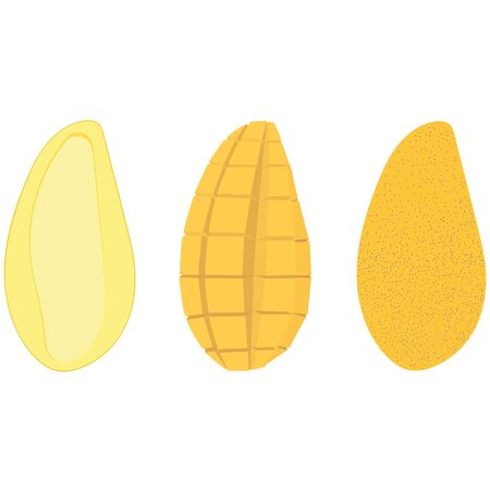 Set of yellow mango in three types – half with a bone, cut, in a peel. Vector illustration.