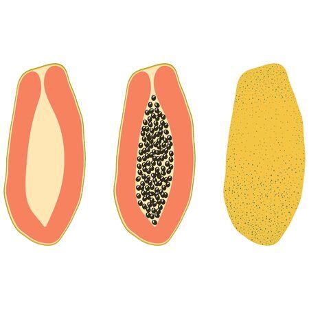 Set of three types of yellow papaya – half, with bones, in the skin. Vector illustration.