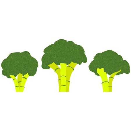 A set of three green cabbage broccoli inflorescences isolated on a white background. Vector illustration.