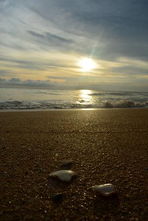 brine: sea beach brine shell