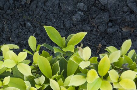 stalk: tree soil, ground, clay, earth, land, blind snake,leaves, leaf, foliage, stalk Stock Photo